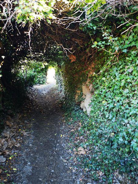 Chemin d'accès à la cascade pétrifiante de Remollon